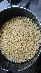 みそ作り 大豆浸水
