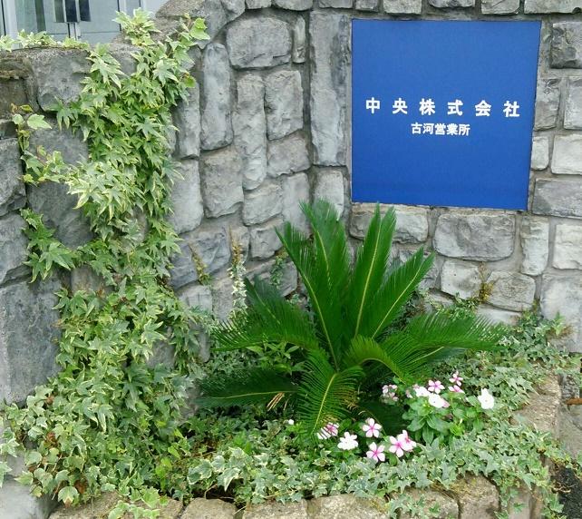 現在の古河営業所花壇