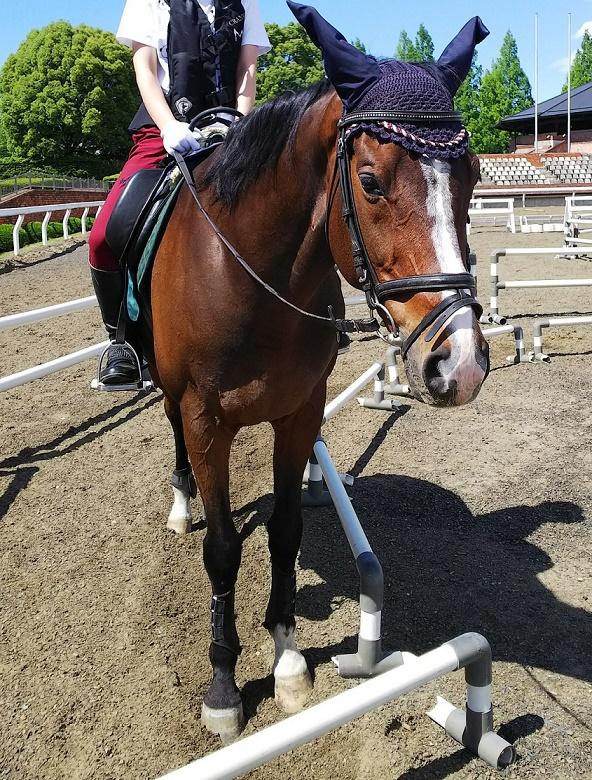 体験乗馬で乗った馬です。