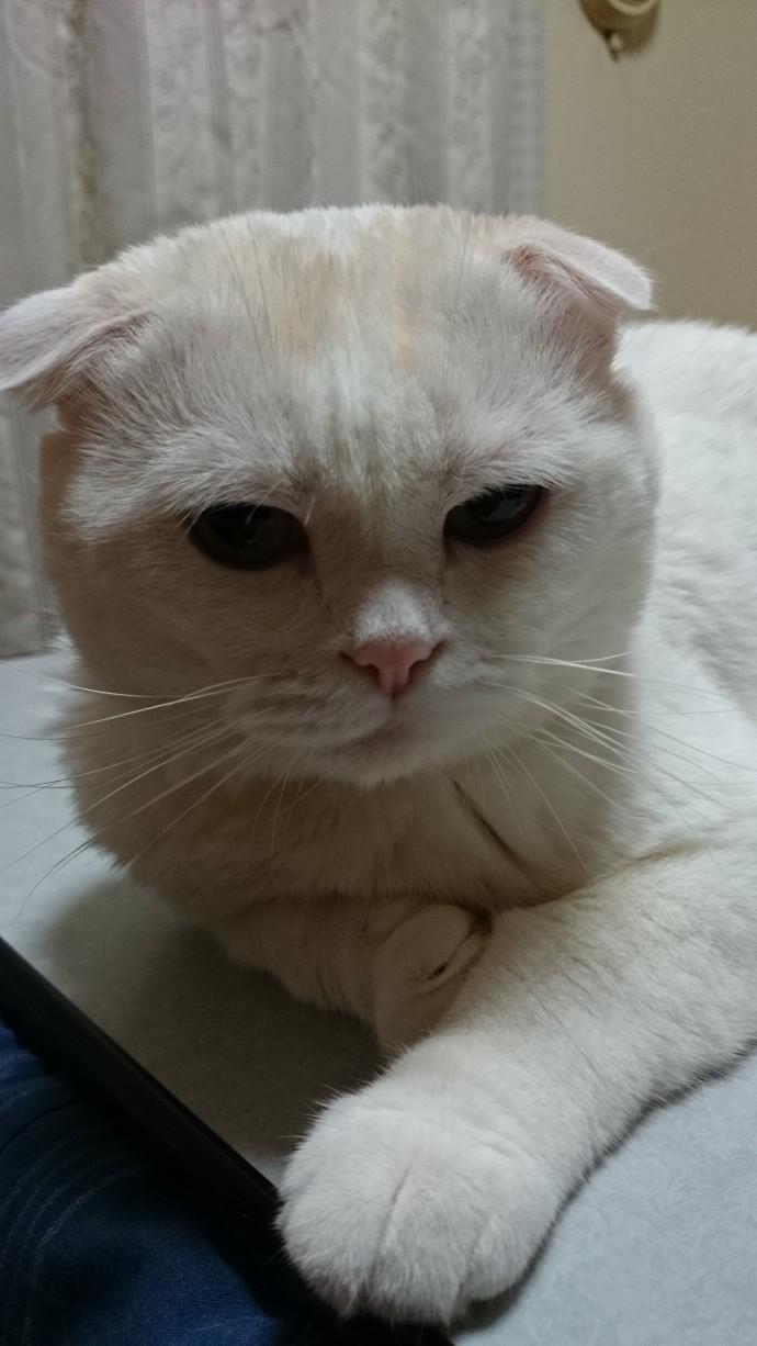 いつのまにか日中は汗ばむような季節となりましたが、いかがお過ごしですか。 こんにちは、SCのなおみーたんです。 うちのパトロール隊長、アブドーラ・ザ・ブッチャーと同じおでこを持つみーたんを紹介したいと思います。・・・傷ではなく模様ですよ。 こう見えて猫ちゃんで60歳の還暦ですが、パトロールと昼寝をかかさない、律儀なぐうたらです。