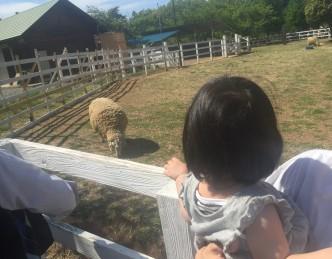 娘が羊を見ている写真